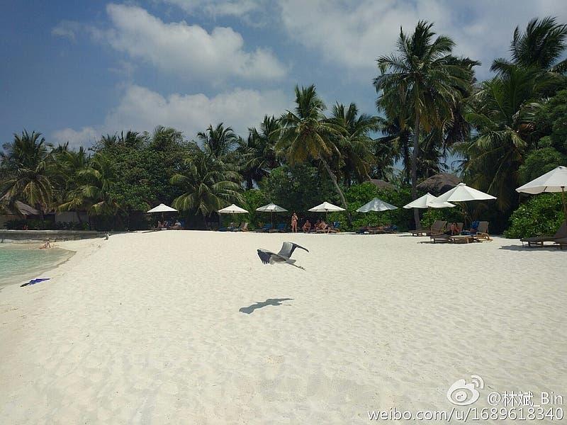 xiaomi_mi_5_camera_sample_lin_bin_weibo