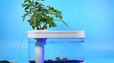 Xiaomi Fish Tank