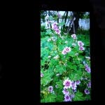 xiaomi mi3 1080 150x150 First Xiaomi Mi3 photo sample and possible 1080 screen photos